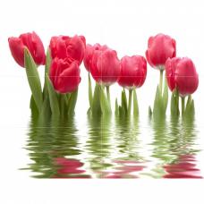 Фреш Тюльпаны  75*100 светлый Панно